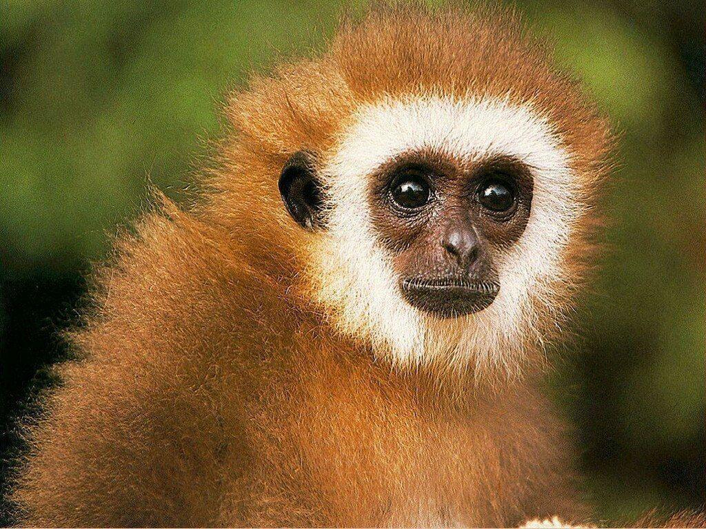 monkey-wallpaper-1.jpg