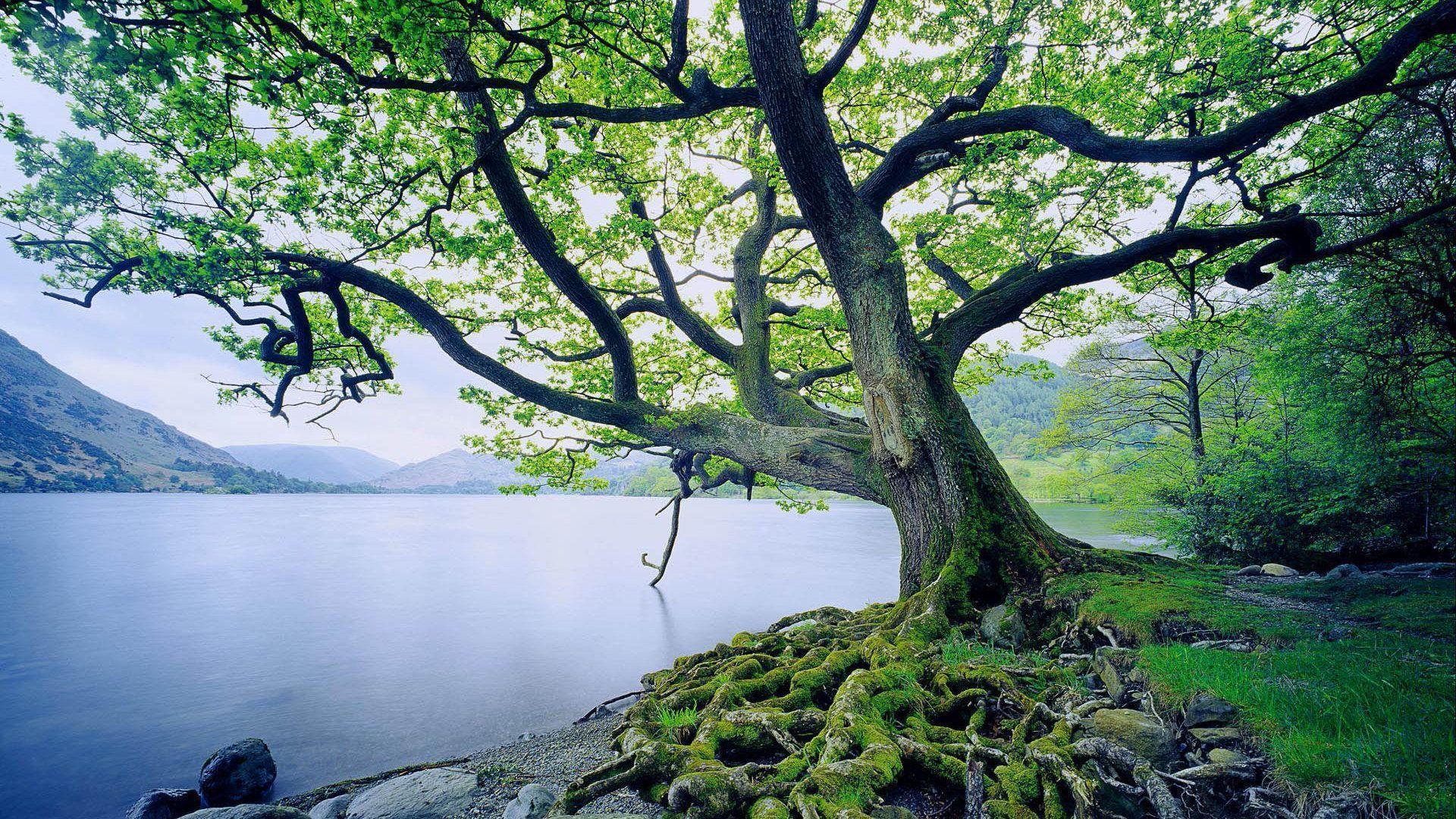 اروع صور من الطبيعة Best Nature Wallpapers DaLAuCE