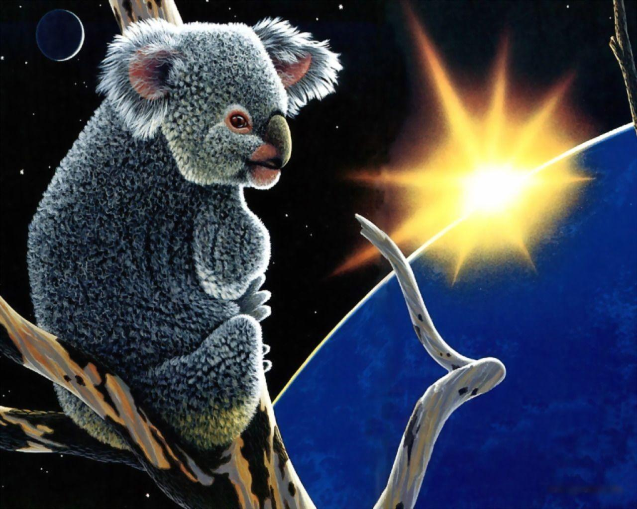 Koala wallpaper Wallpapers - HD Wallpapers 3134
