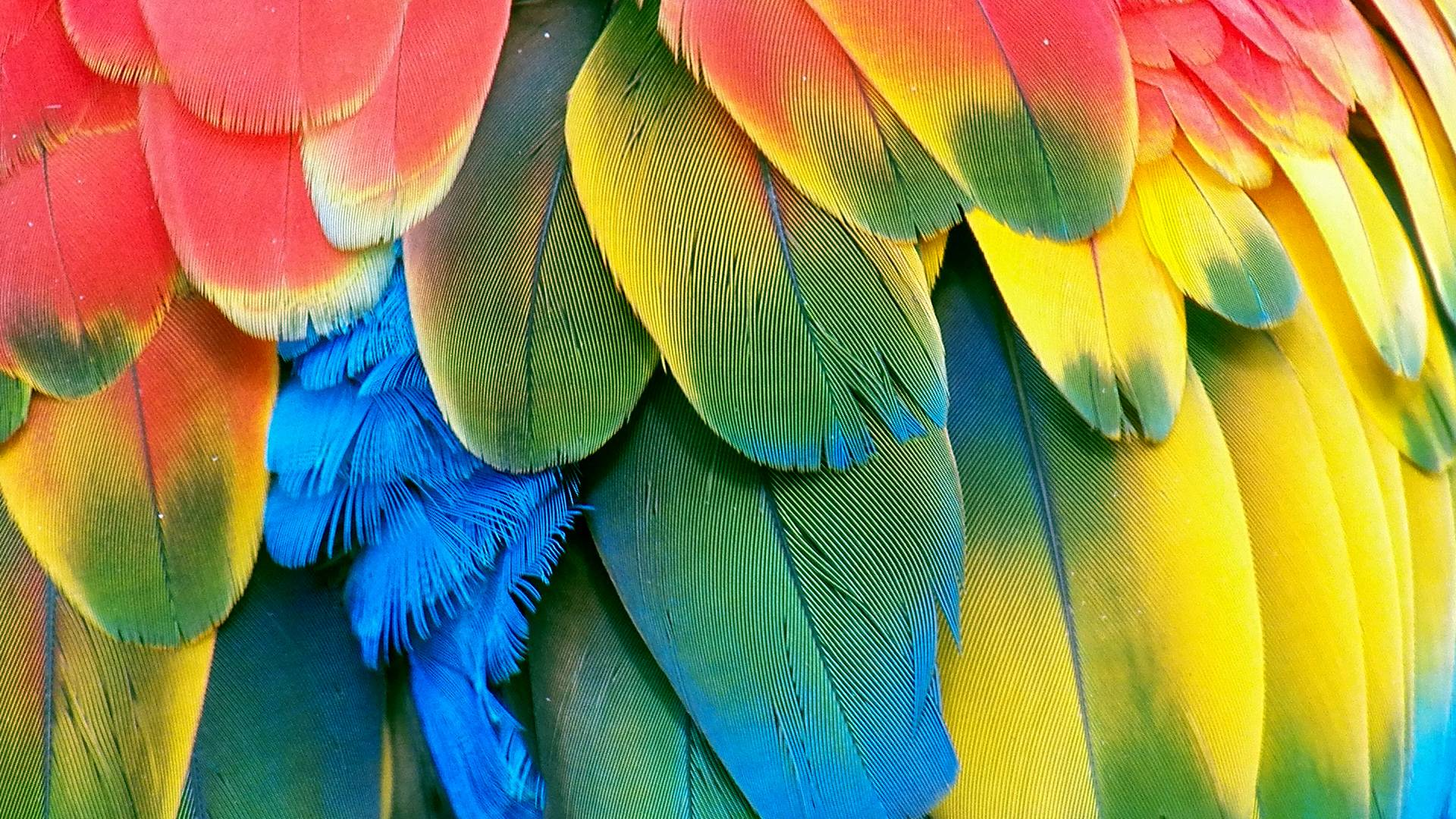 awesome colored feathers wallpaper - photo #18