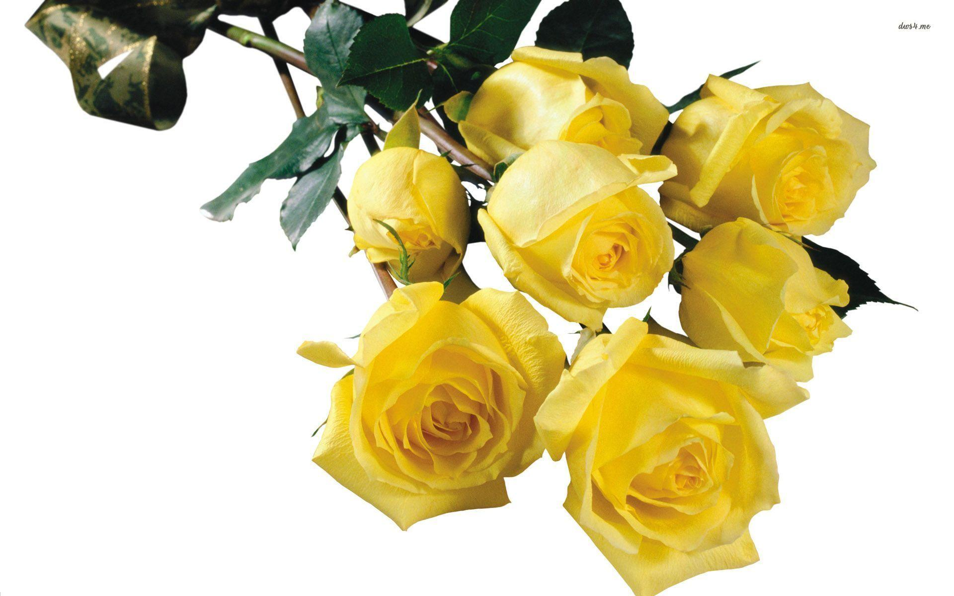 wallpaper of yellow roses - photo #18
