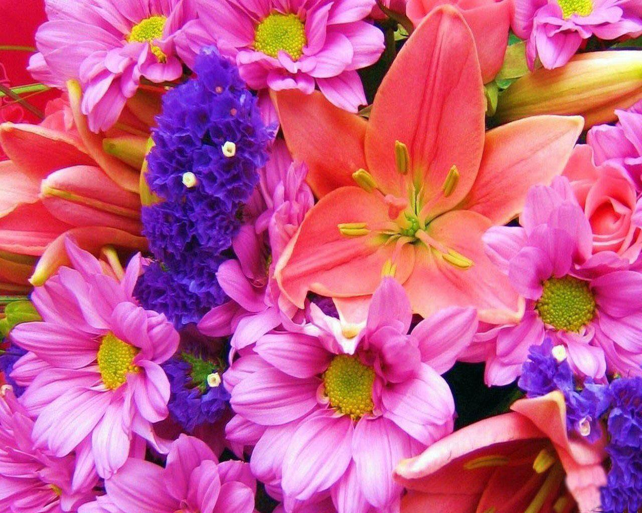 Colorful flower wallpapers wallpaper cave wallpapers for pretty colorful flower backgrounds mightylinksfo