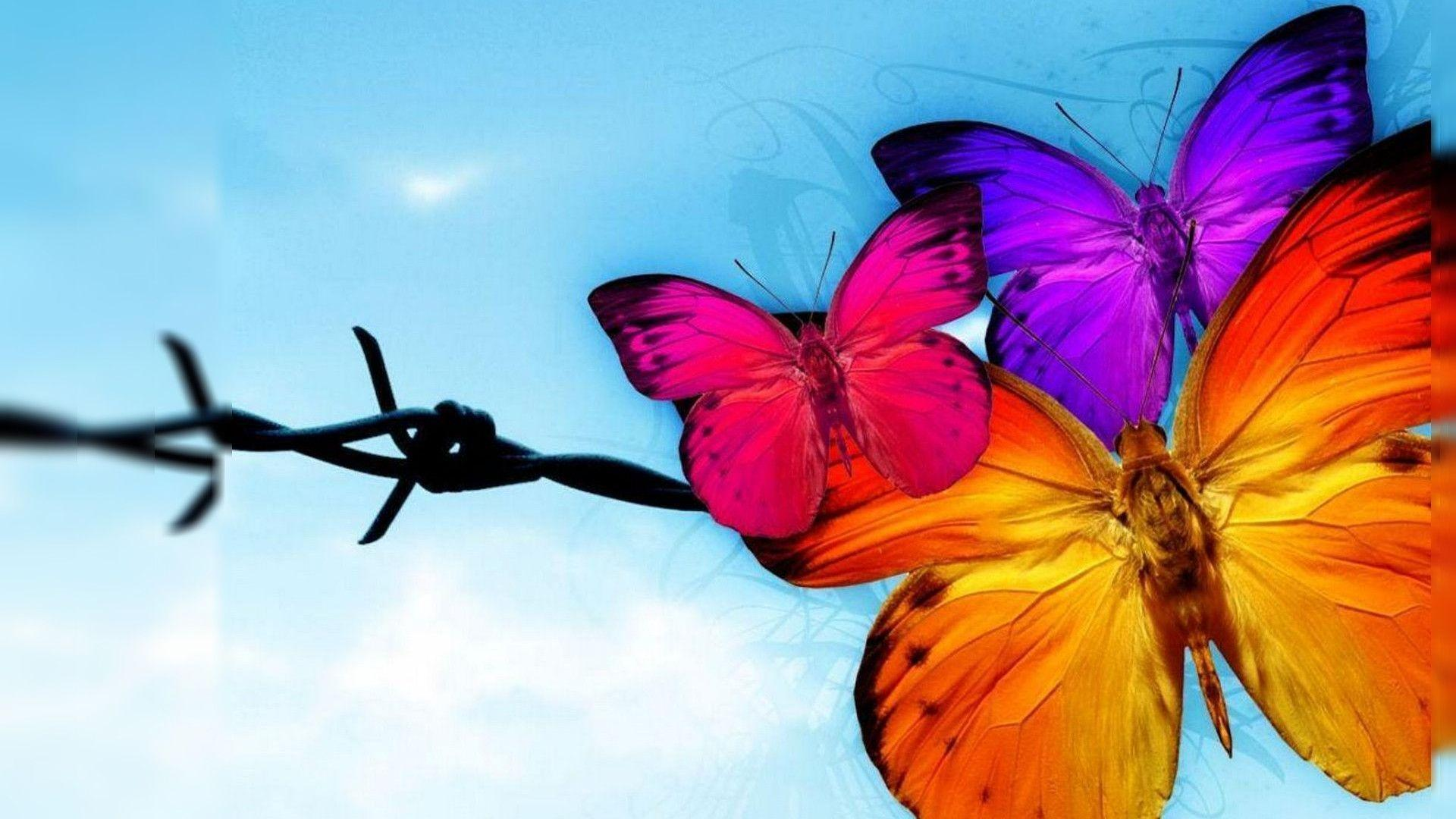 butterfly hq wallpaper 1024x768 - photo #19