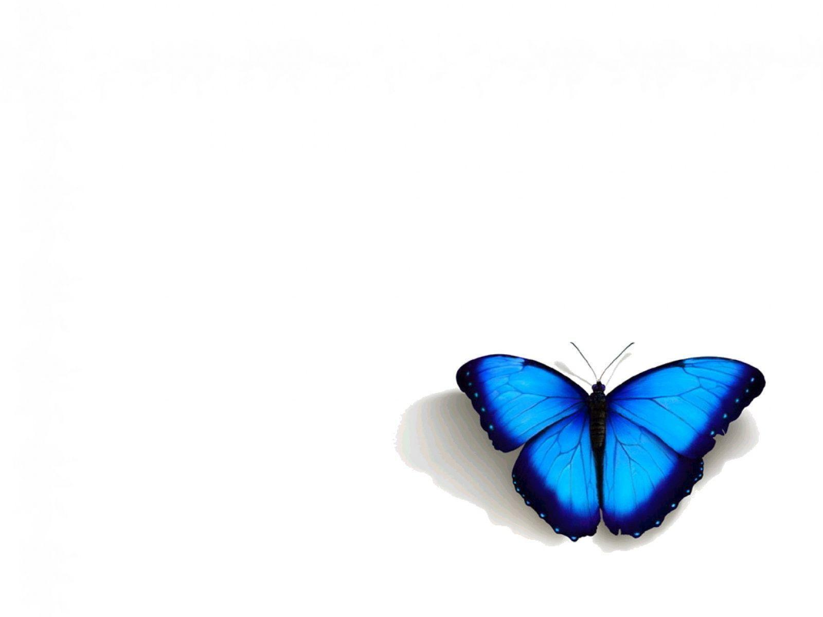 butterfly blue abstract wallpaper - photo #31