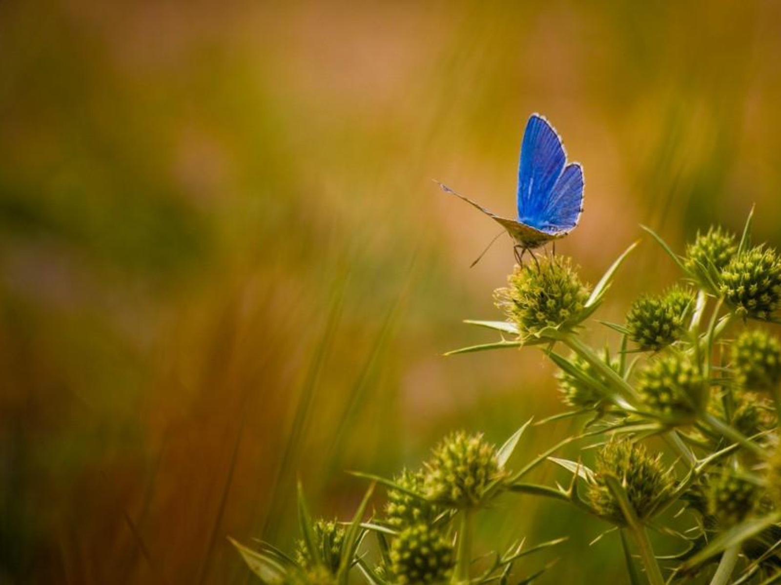 Beautiful Butterflies Wallpapers, Download Free Butterflies ...