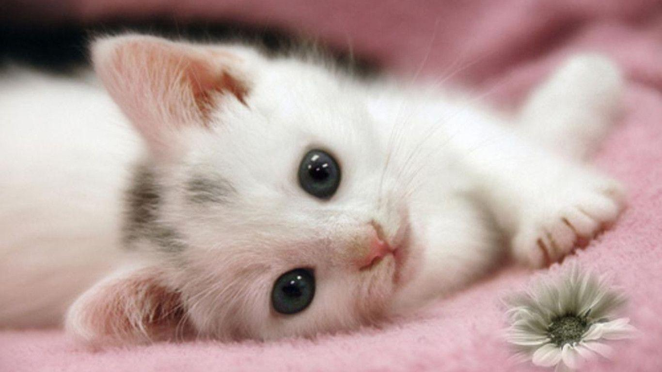 Cute Kitten Wallpaper Free #8775521