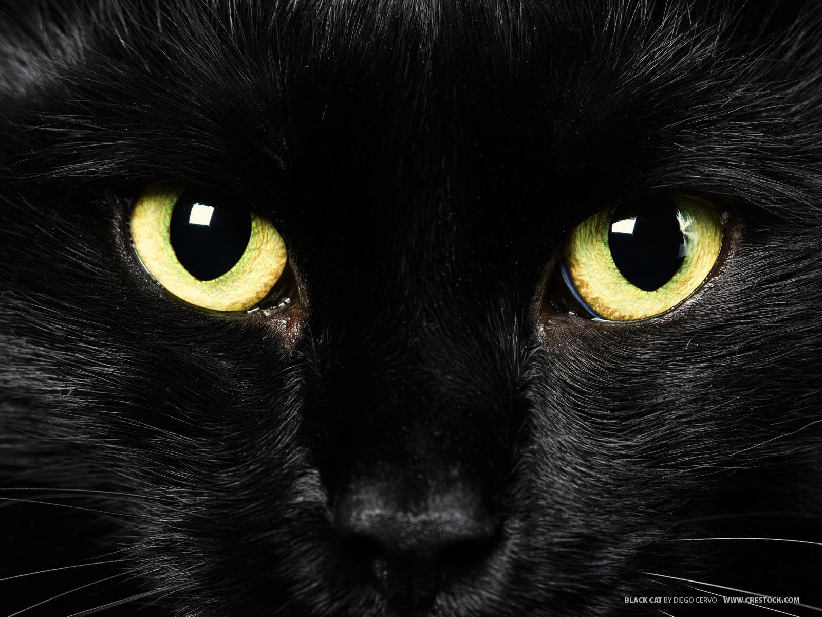 Hd wallpaper cat - Black Cat With Green Eyes Wallpaper Wallpaper Green Hd Wallpaper