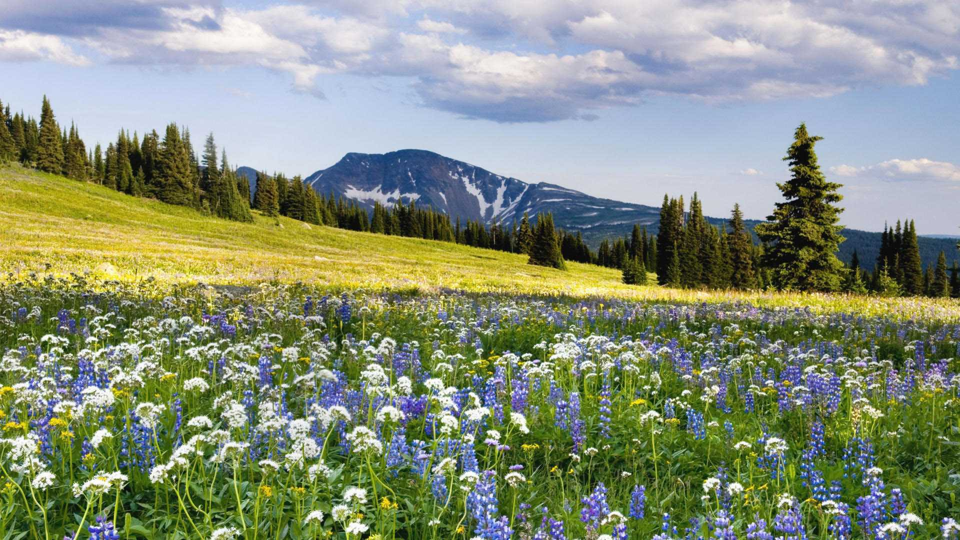 spring natural scenery hd - photo #24
