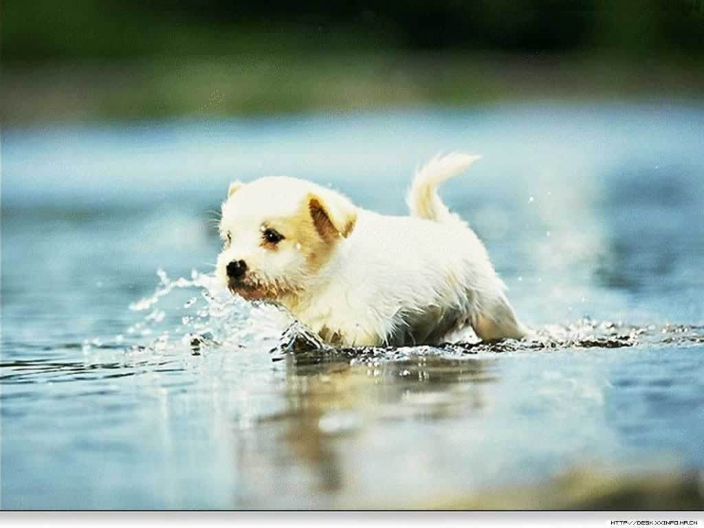 Cute Puppies HD Wallpaper High Quality - Best Wallpapers | Best ...