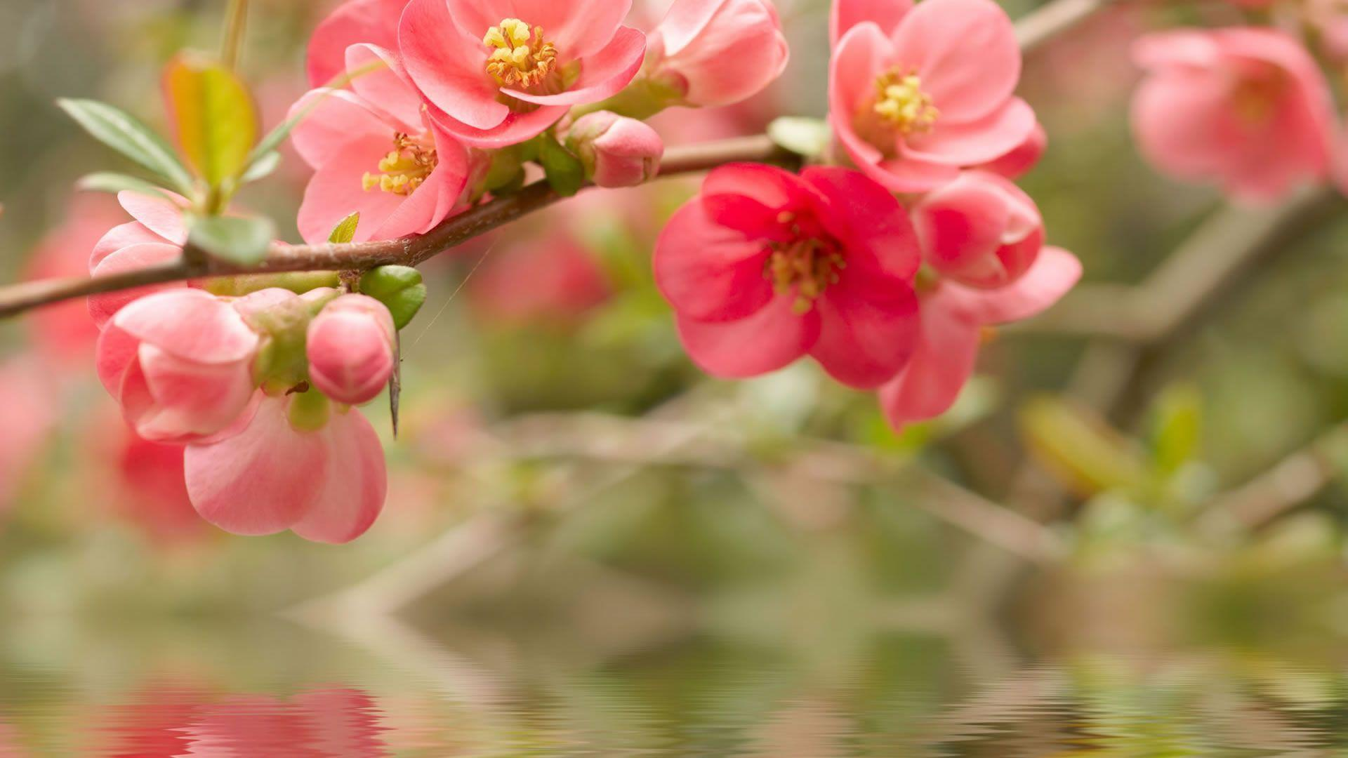 Pictures Of Beautiful Flowers Wallpapers - Wallpaper Cave