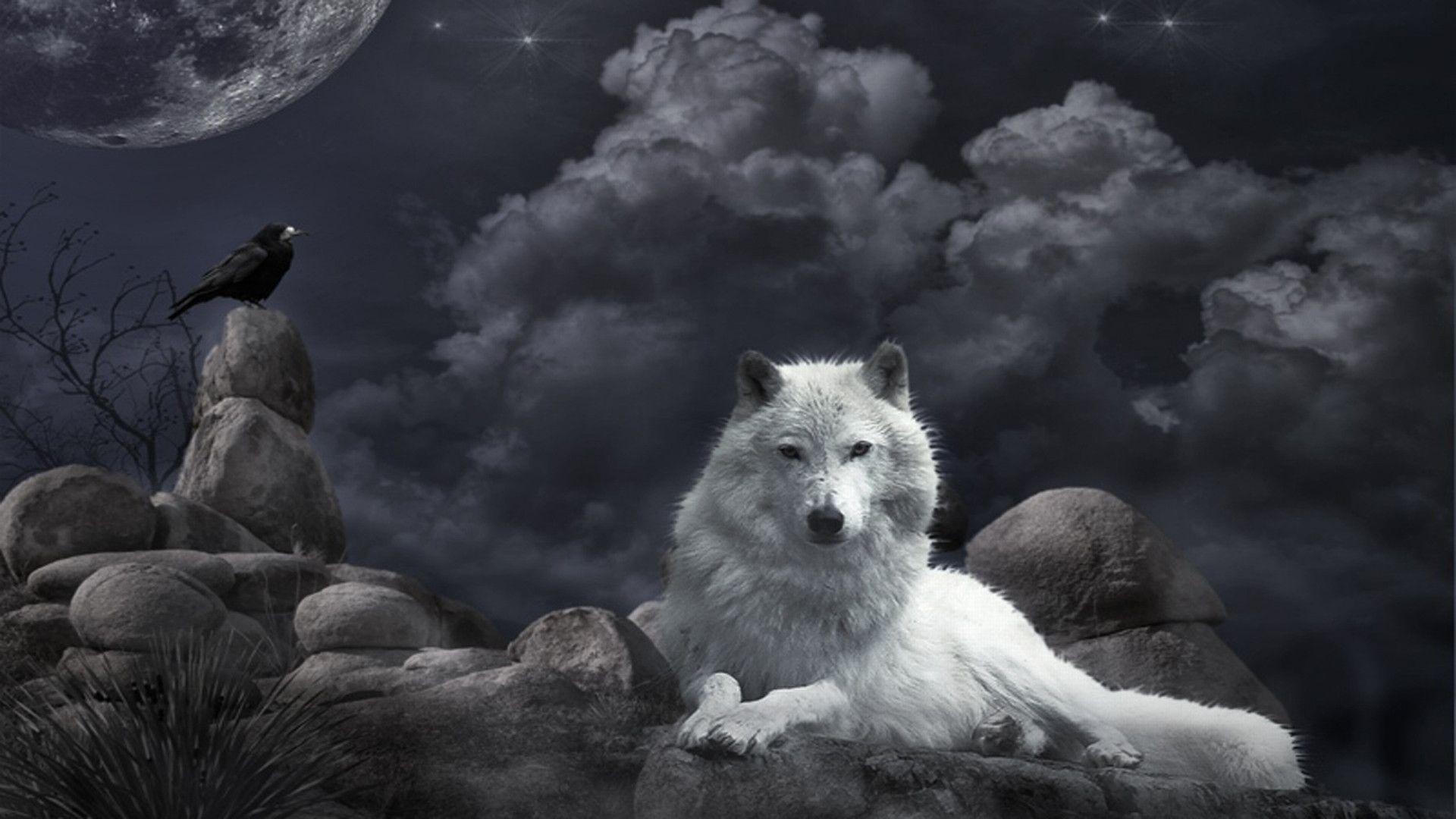 Wolf And Bird Wallpapers Free Backgrounds Deskto Wallpapers