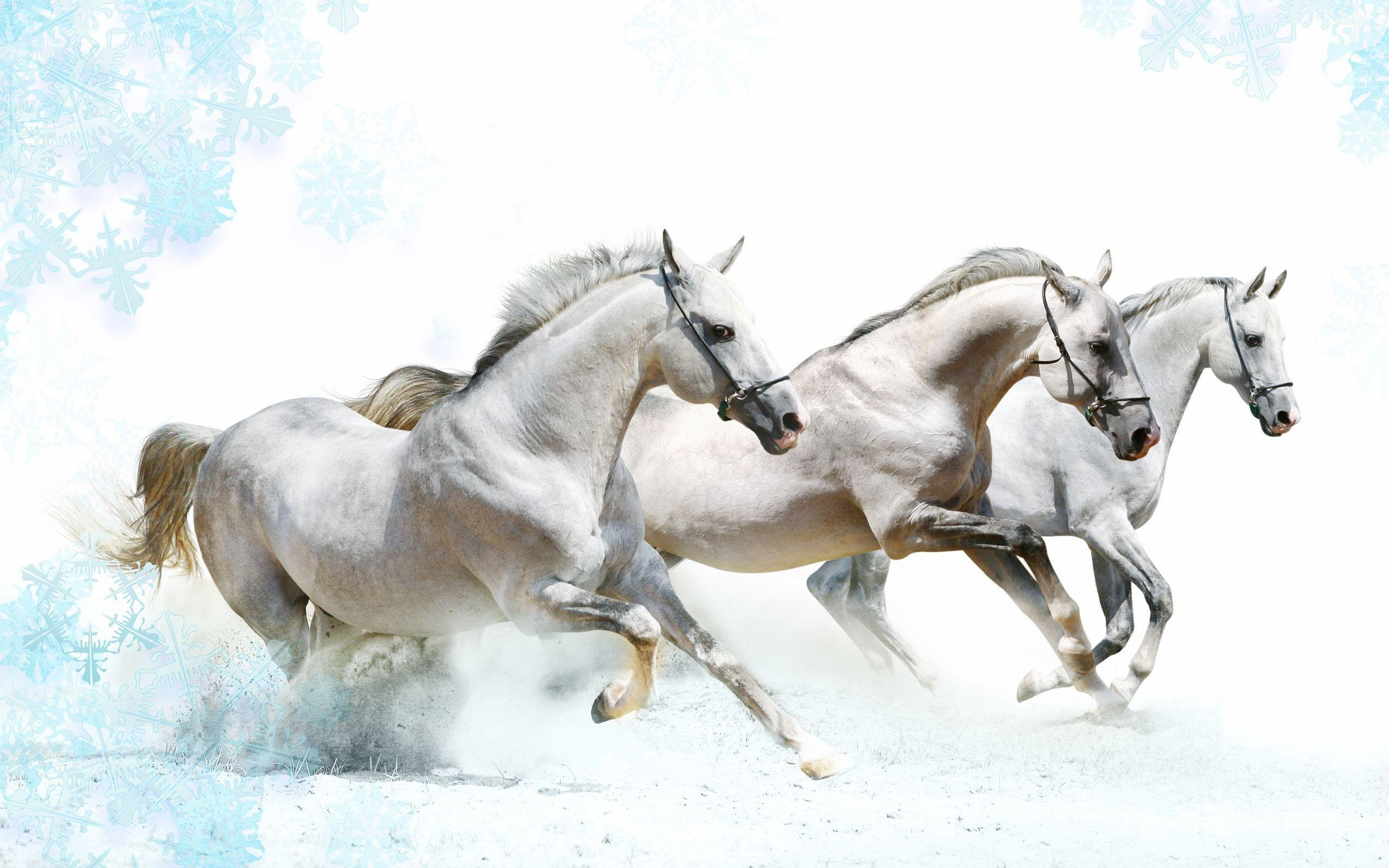 Wallpapers For > White Horse Wallpapers