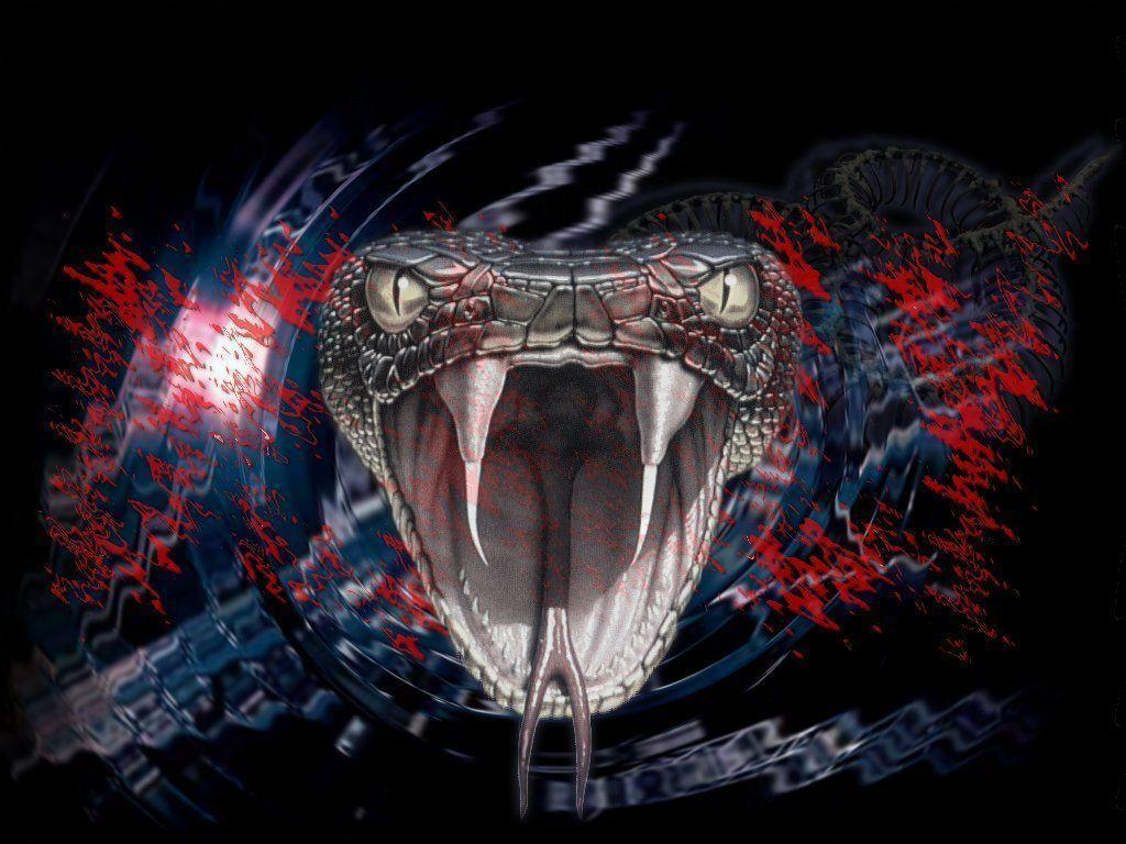 Viper Snake Wallpapers - Wallpaper Cave