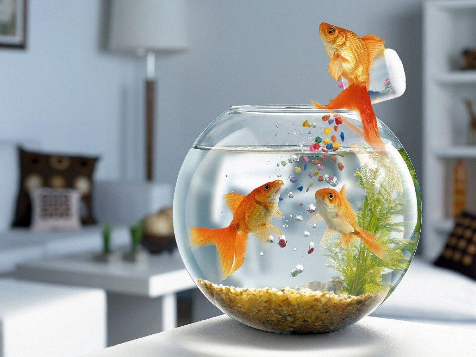 Moving Fish Wallpaper for Desktop - WallpaperSafari