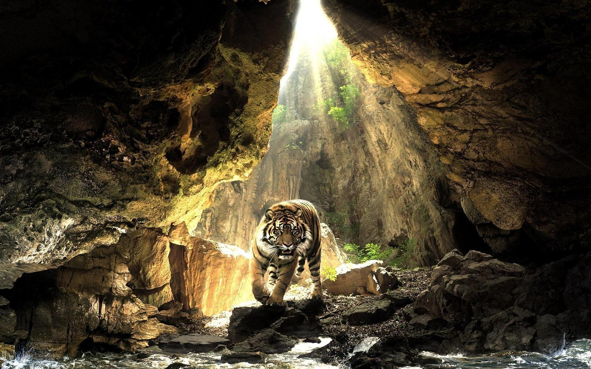 Saber Tooth Tiger Wallpapers - Wallpaper Cave