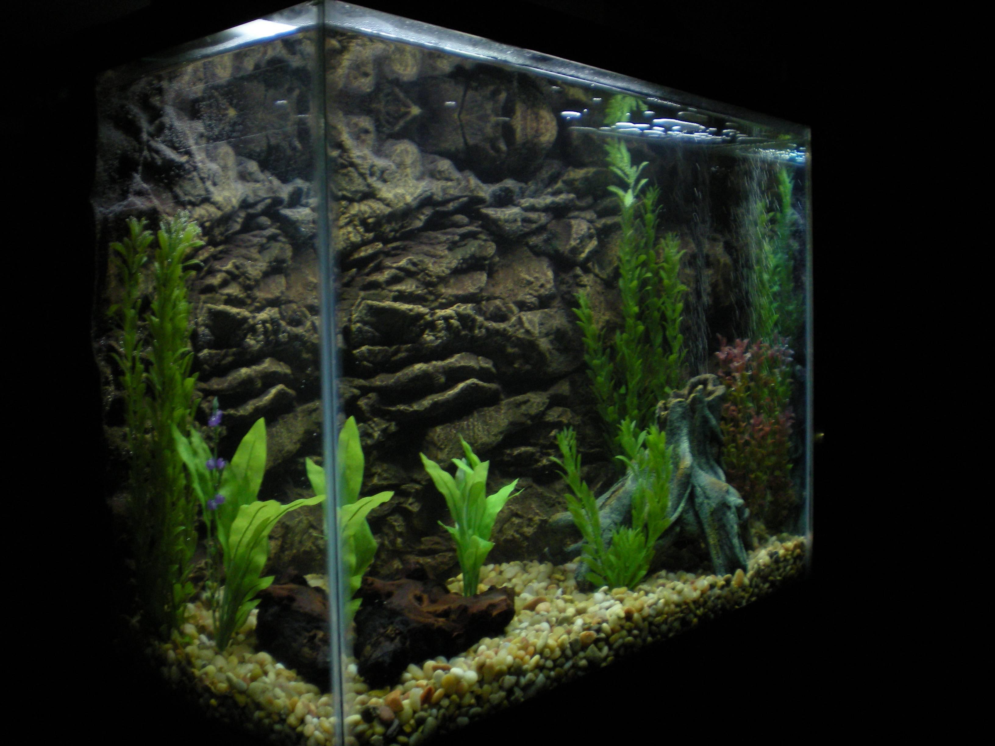 Aquarium Backgrounds 53 Desktop Background | WallFortuner.