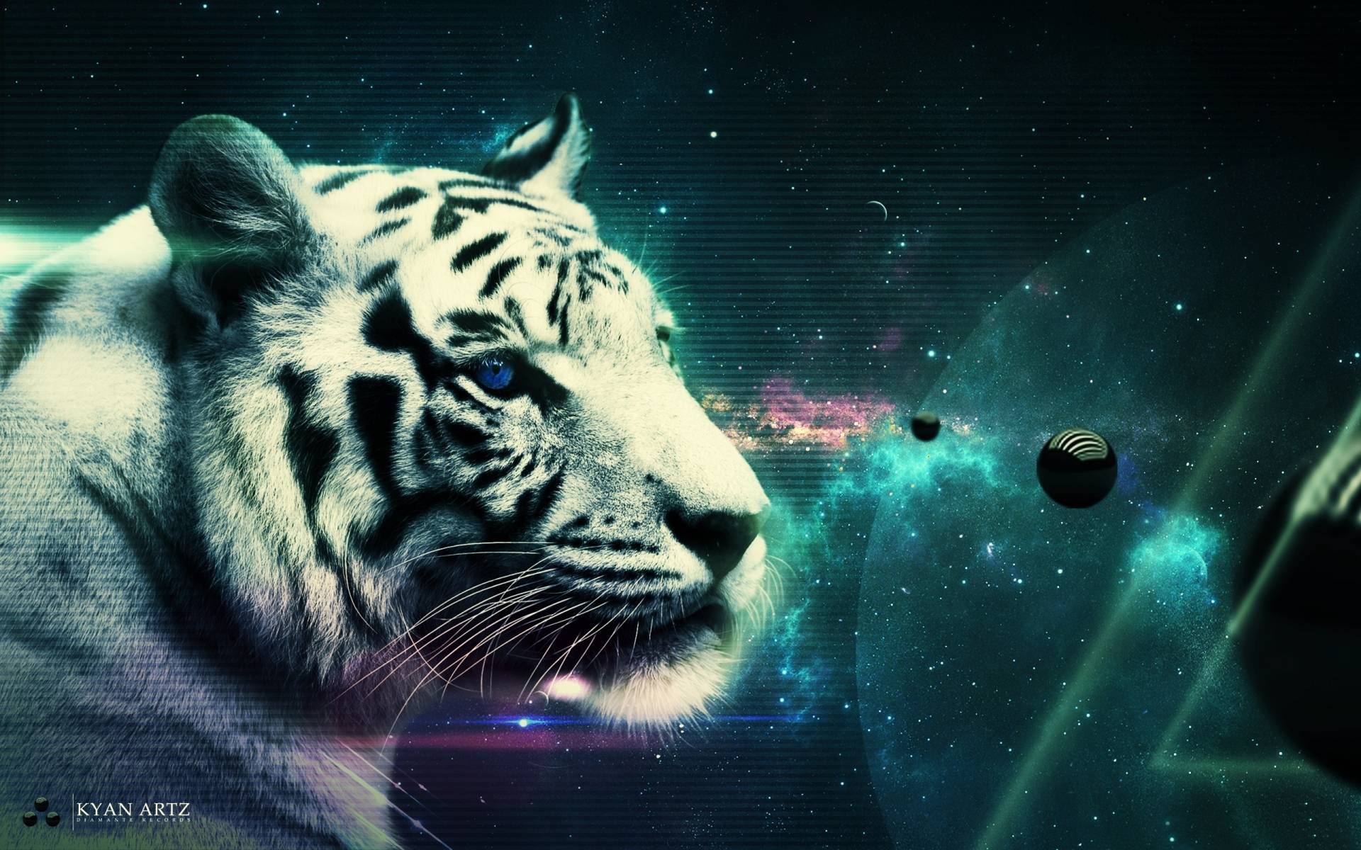 Tiger Pictures Wallpapers Wallpaper Cave
