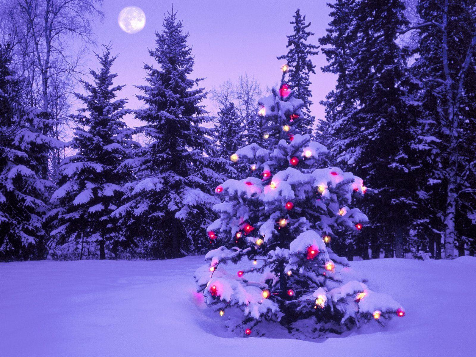 Christmas Tree Wallpapers 30 Backgrounds