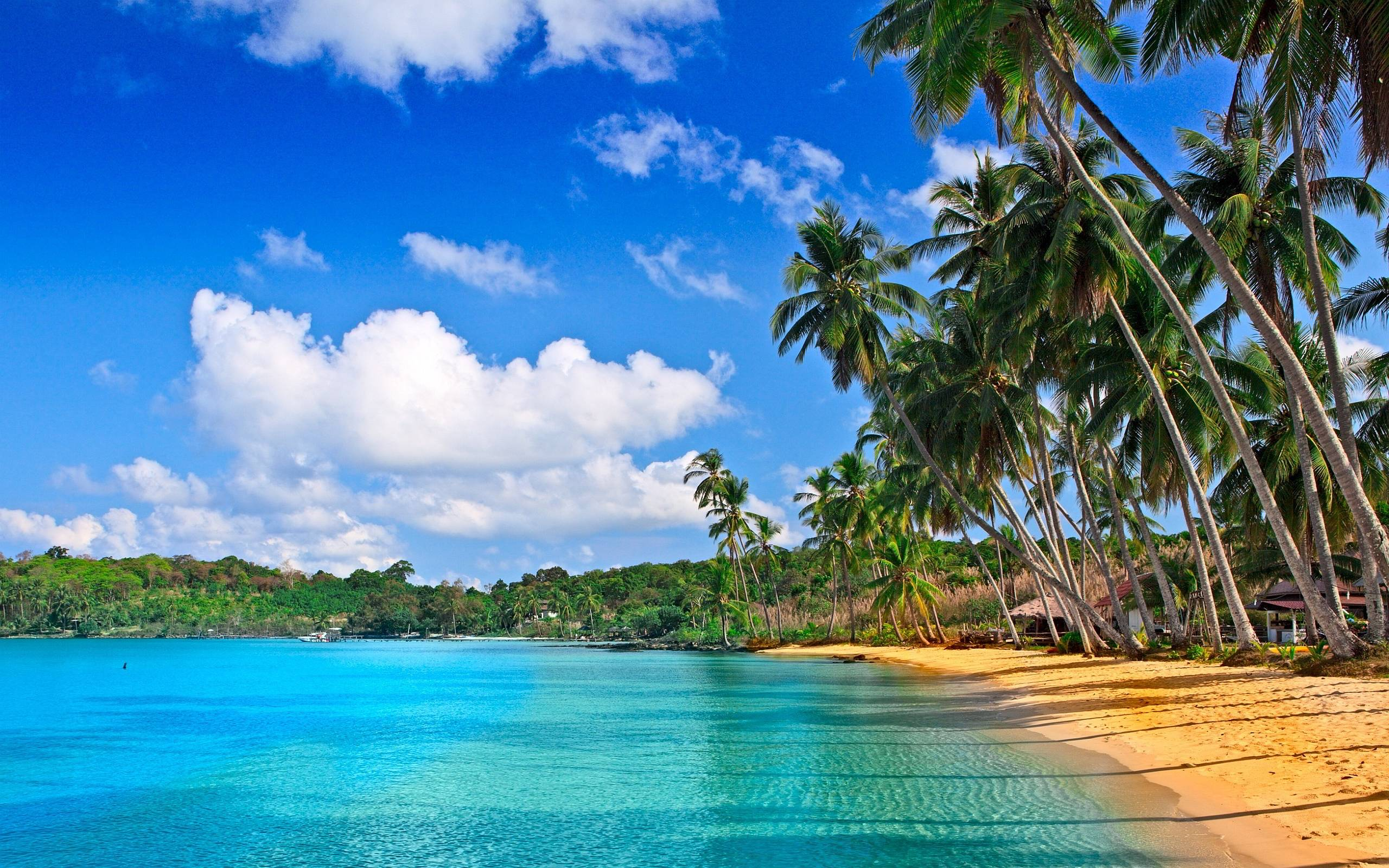 Tropical Colors HD Wallpapers