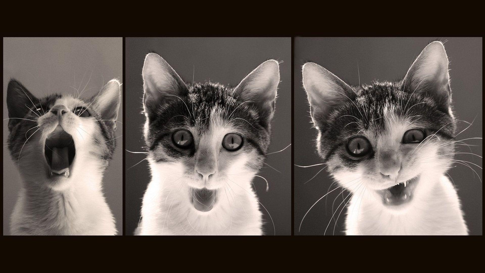 Funny Cat Desktop Wallpapers - Wallpaper Cave
