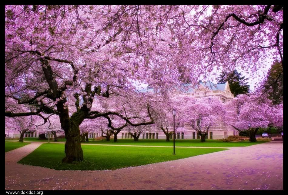 Download Spring Nature Backgrounds Hd Image 3 HD Wallpapers Full Size