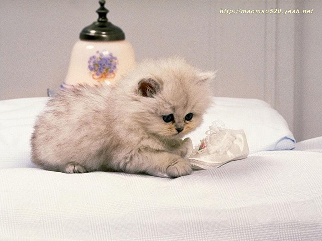Cute Kittens Wallpapers - Animal Wallpapers (2592) ilikewalls.