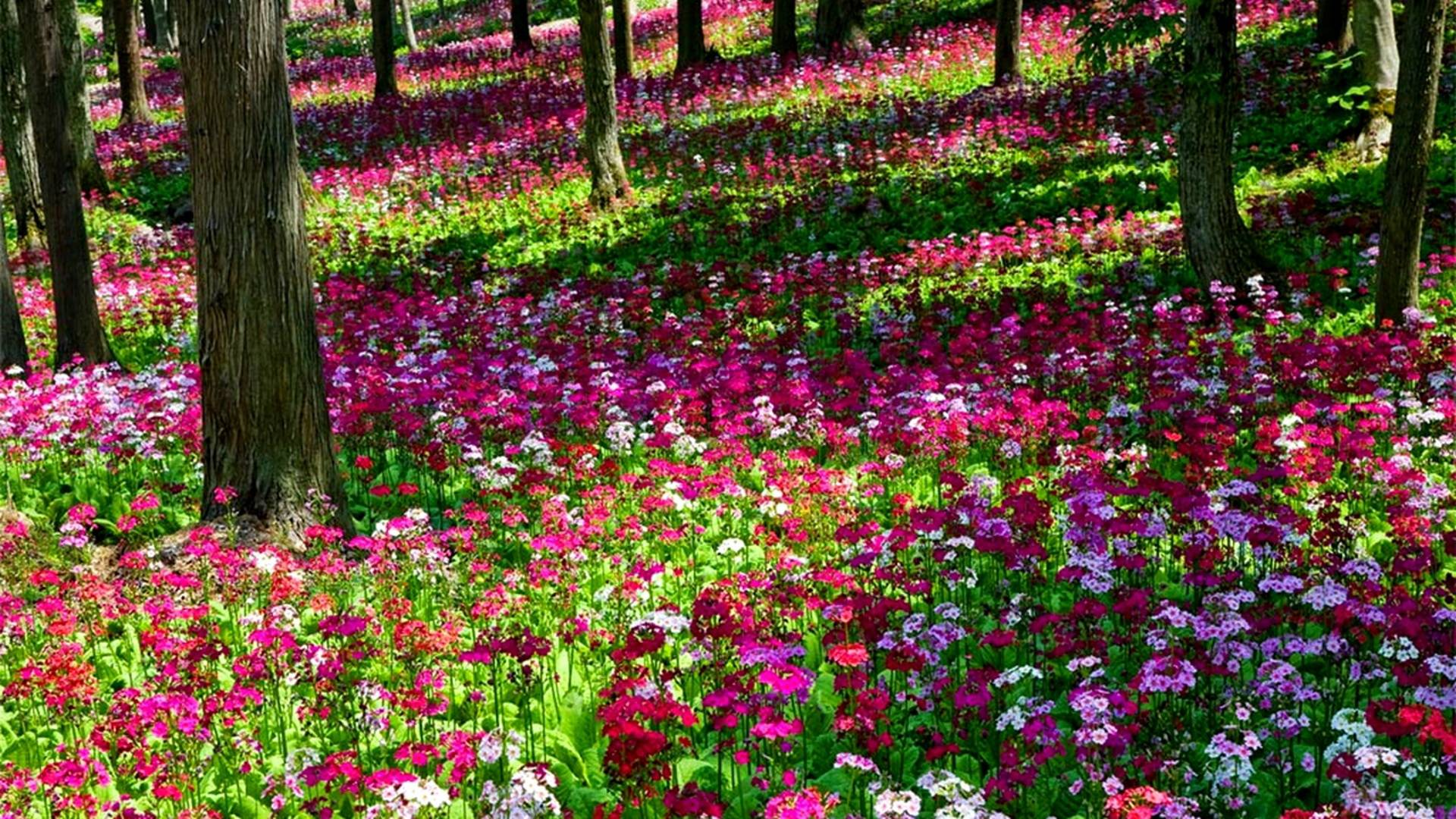 flower garden wallpapers wallpaper cave