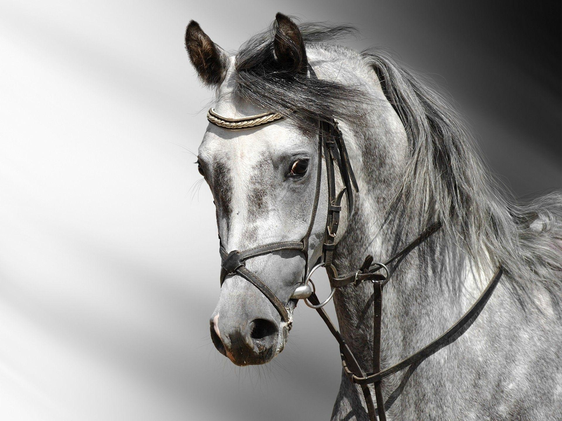White Horse Wallpapers Wallpaper