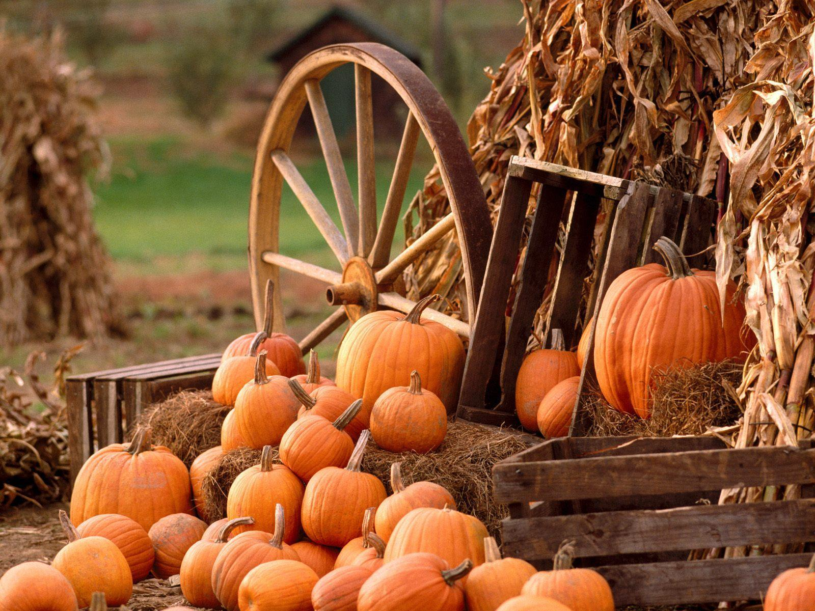 Autumn Harvest Wallpaper Free Desktop Background