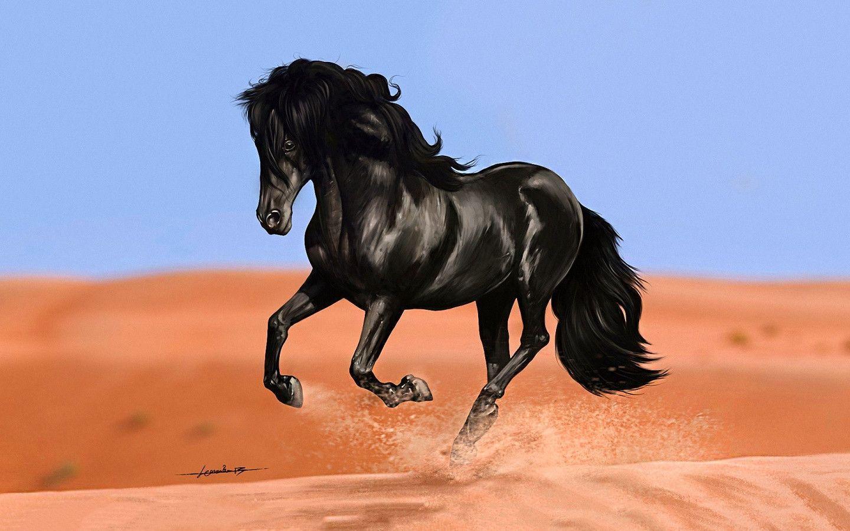Black Horse Wallpapers - Wallpaper Cave - photo#37