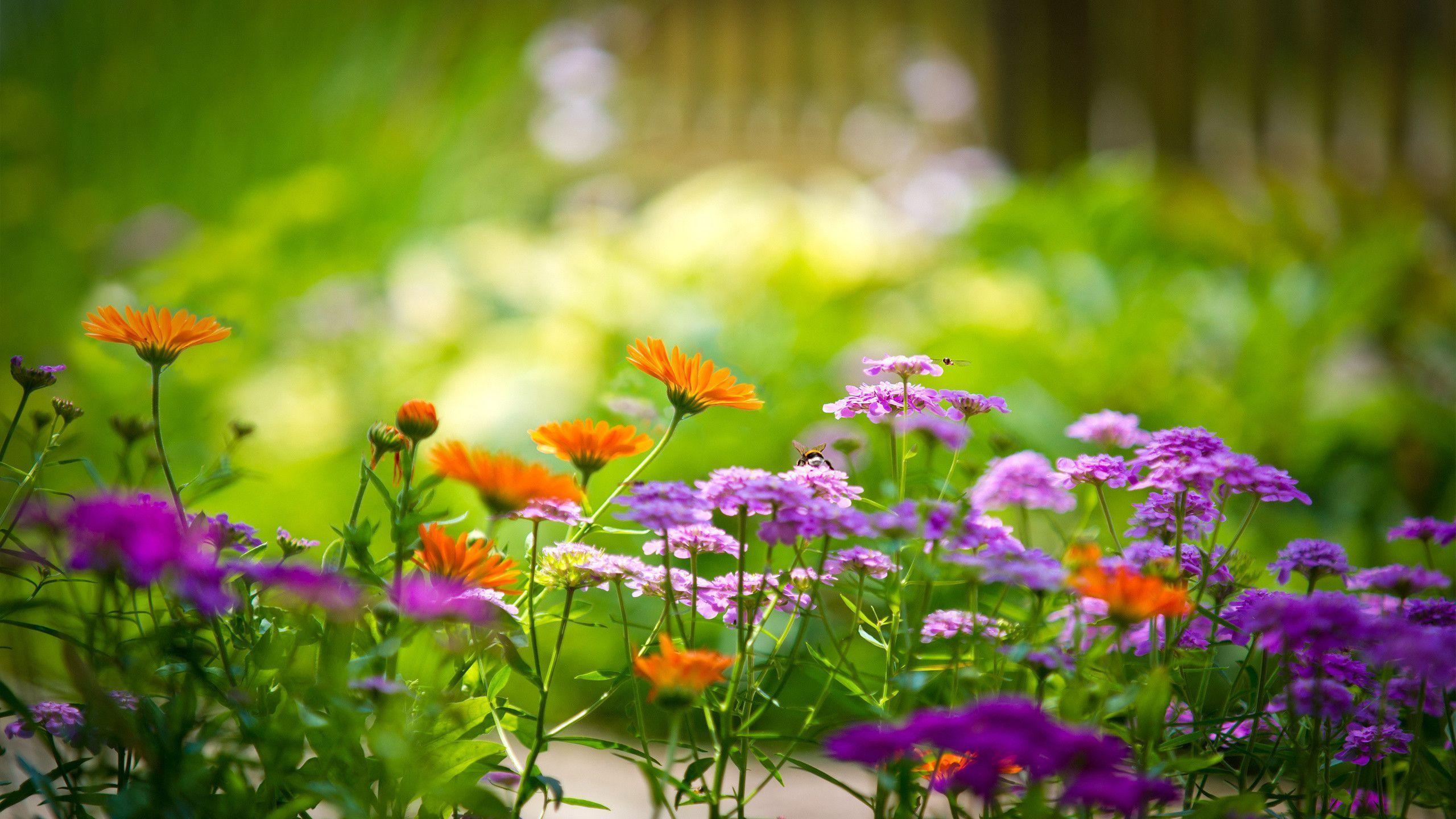 Flower Garden Backgrounds - Wallpaper Cave