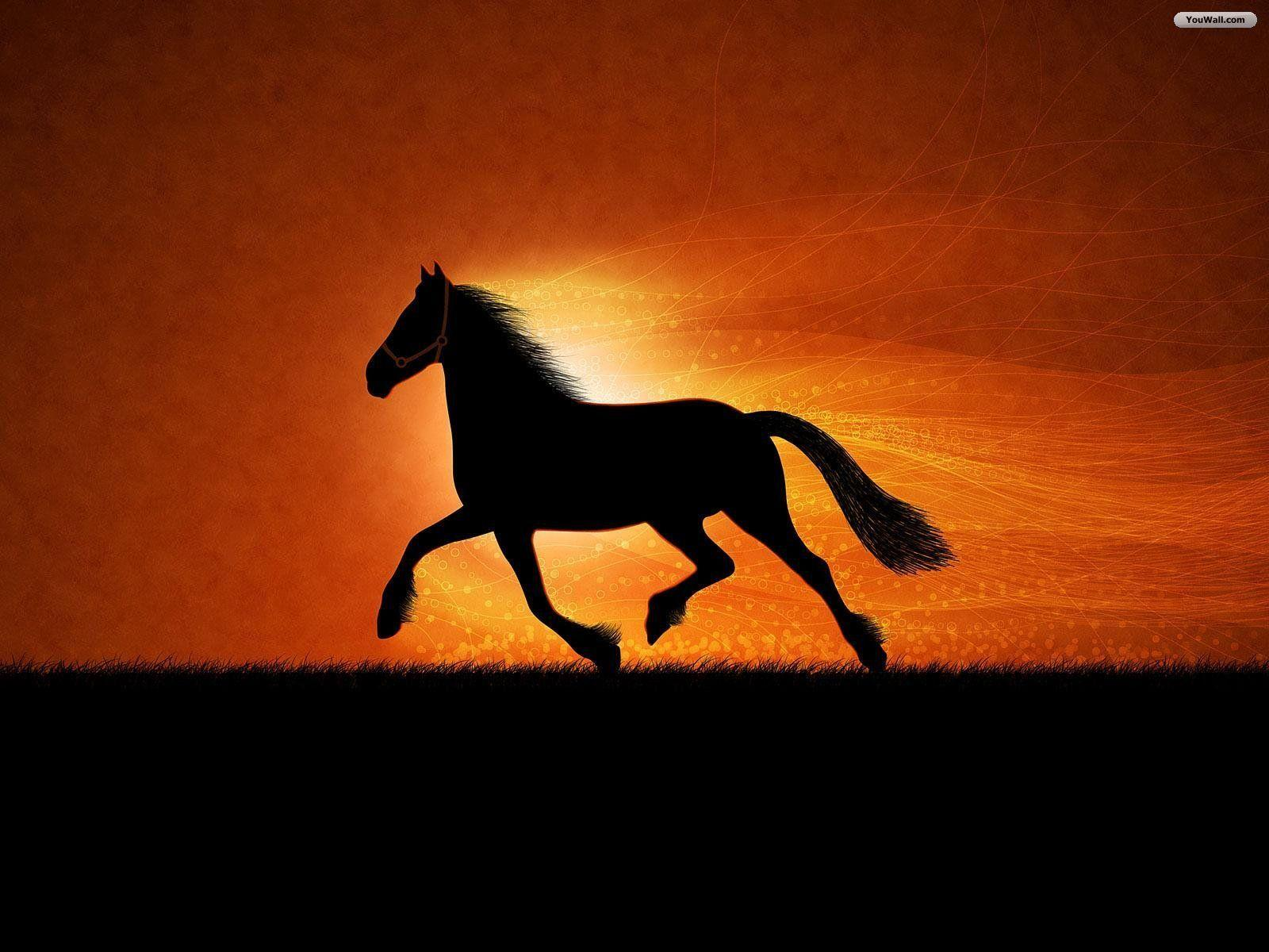 horse wallpaper awesome pair - photo #37