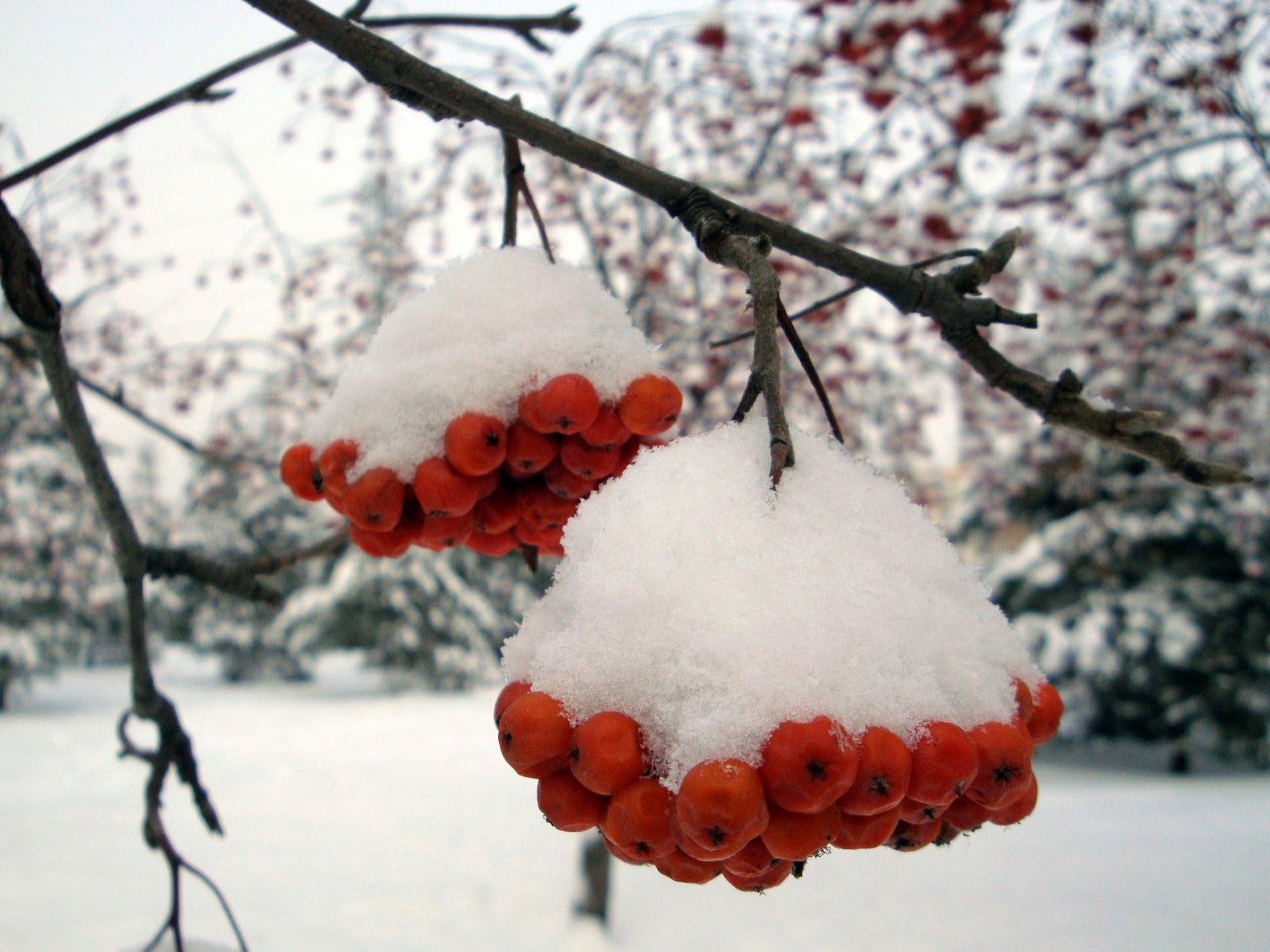 ilona wallpapers beautiful snowy - photo #37