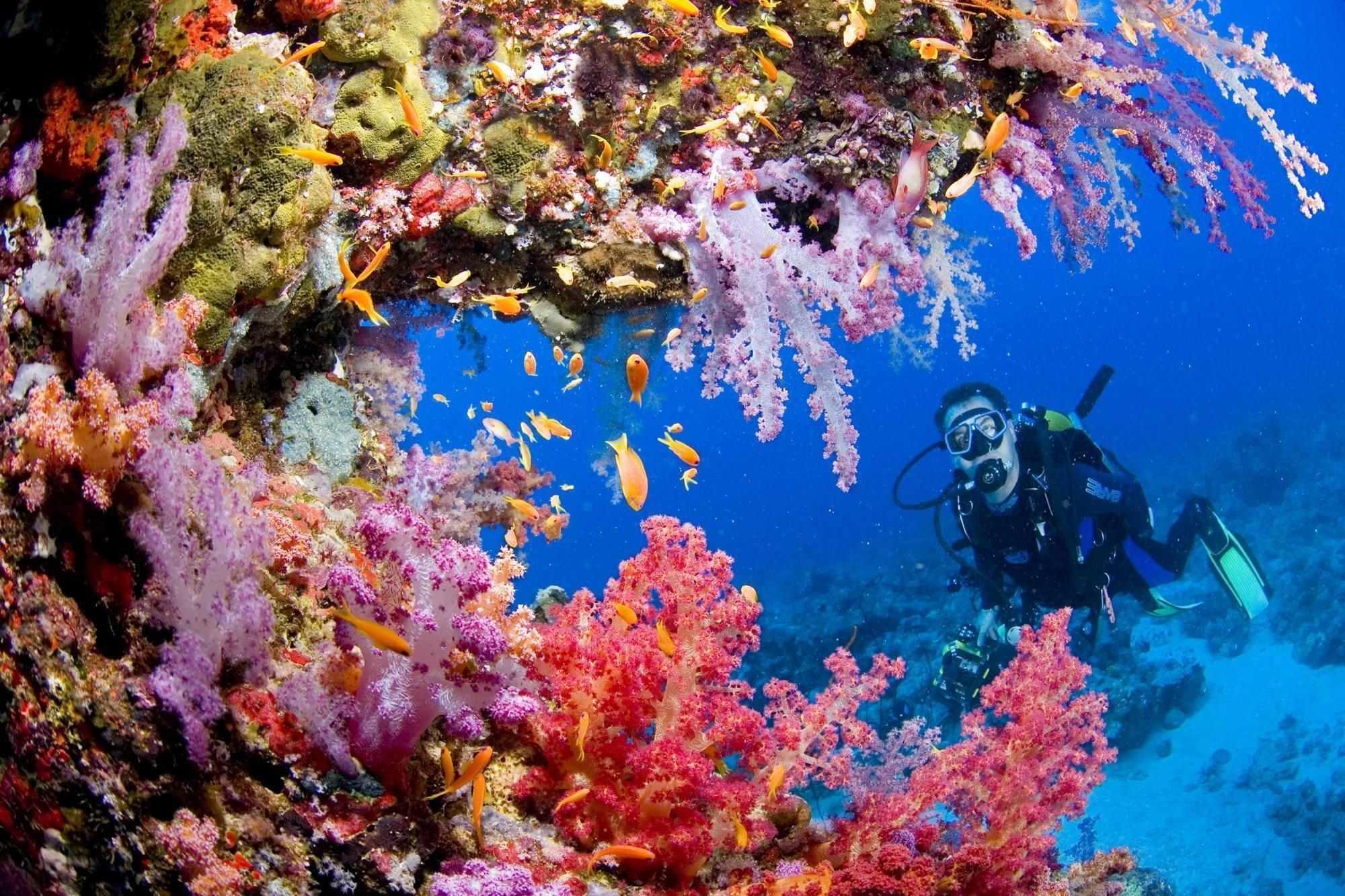 Exploring Coral Reef Sanganeb Sudan Wallpaper | High Quality PC ...