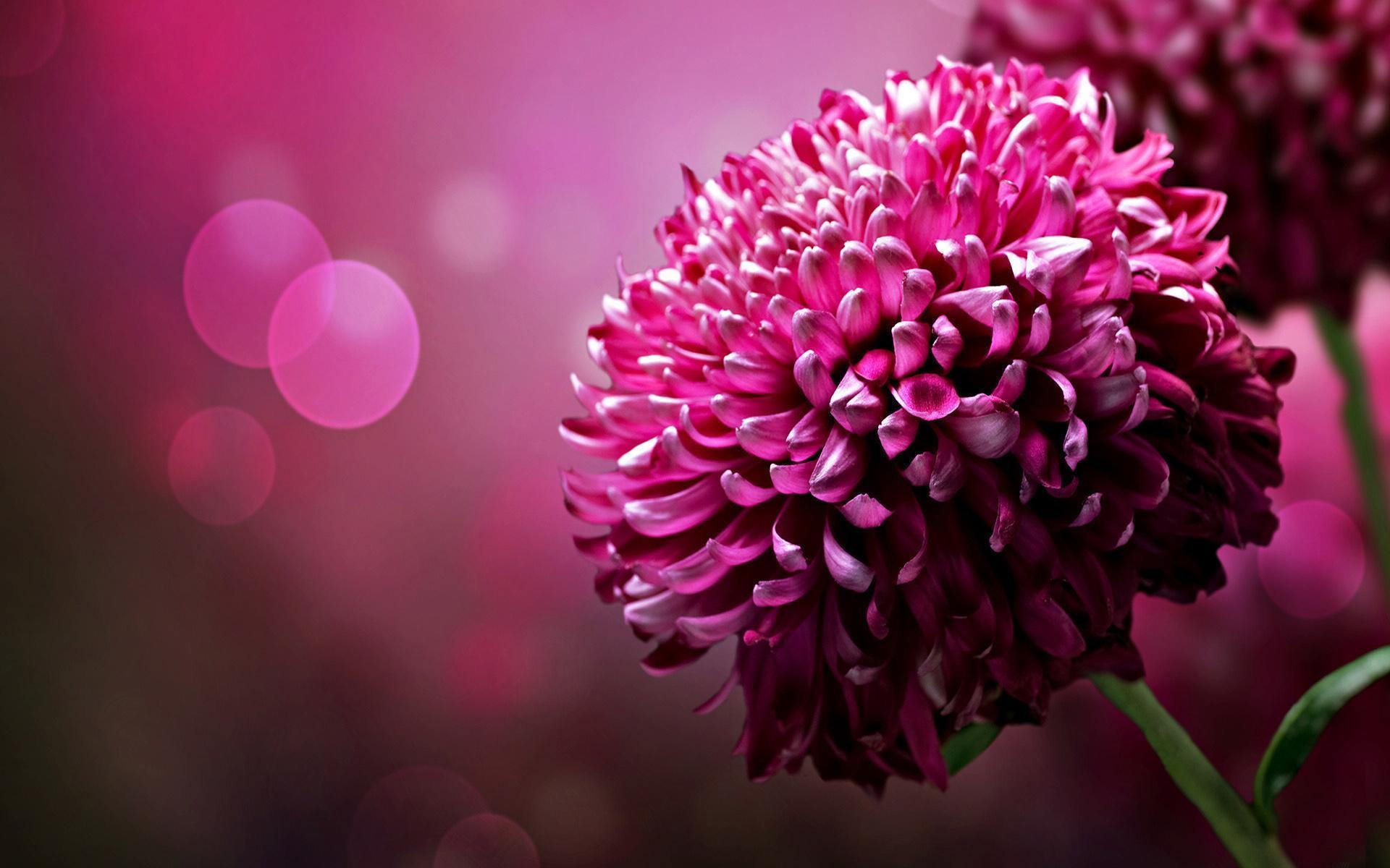flowers image desktop backgrounds - wallpaper cave