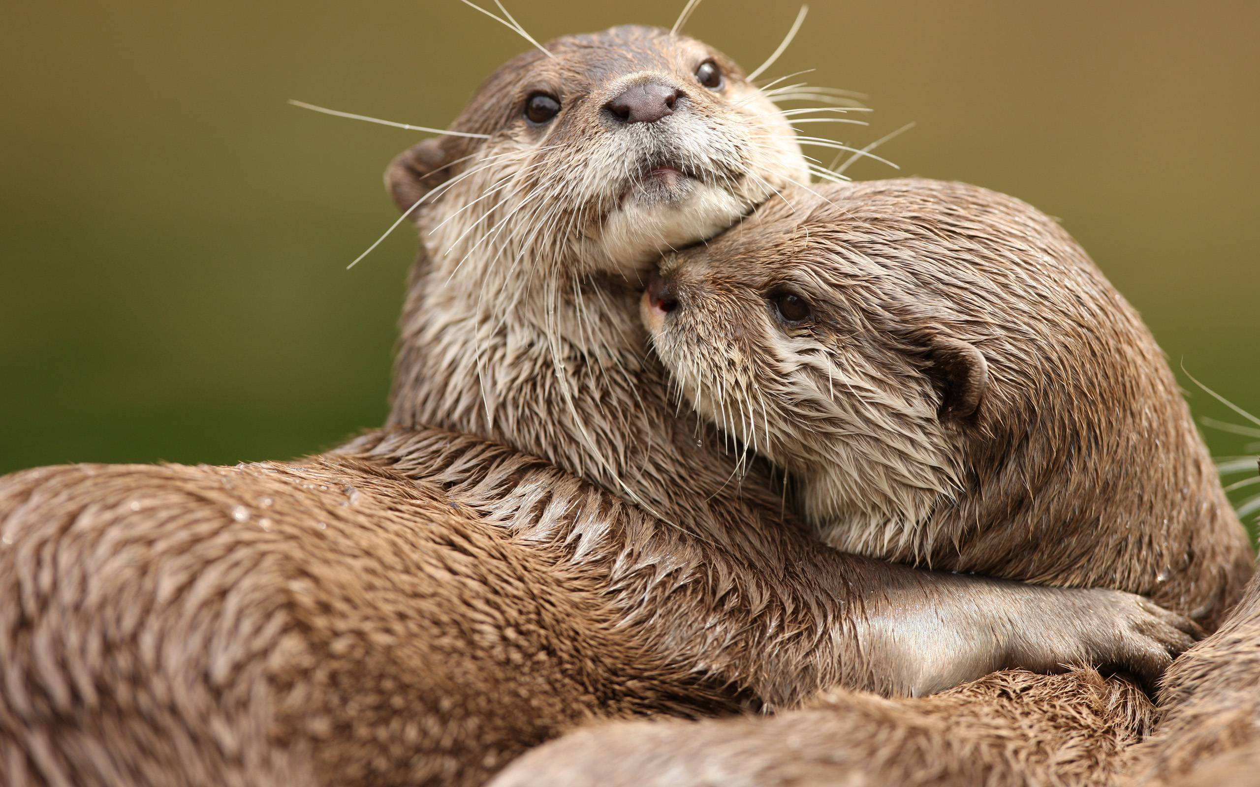 Otter Wallpapers Wallpaper Cave