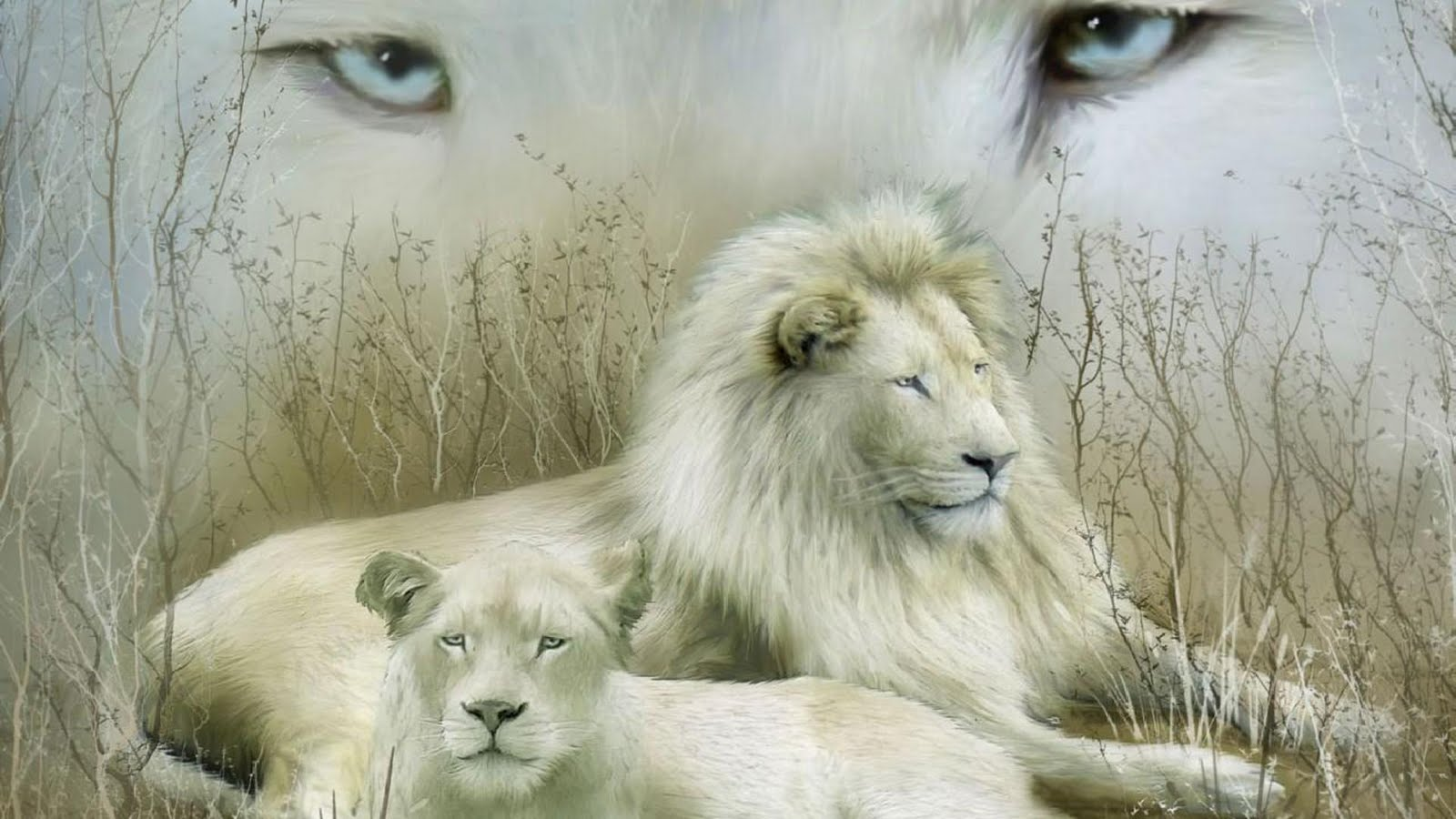 Wallpapers White Lion