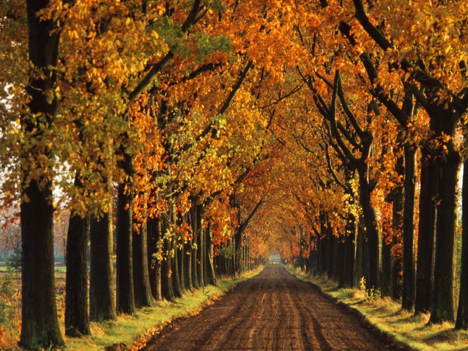autumn wallpaper 007 free - photo #7