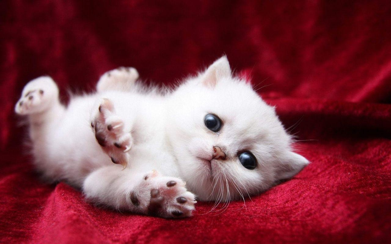 Wallpapers For > Funny Kitten Wallpaper