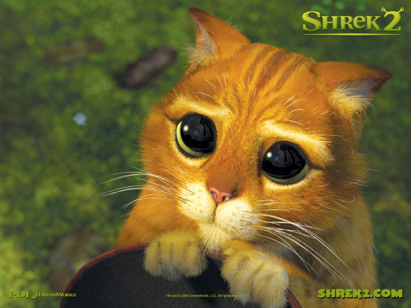 Shrek cat free desktop backgrounds