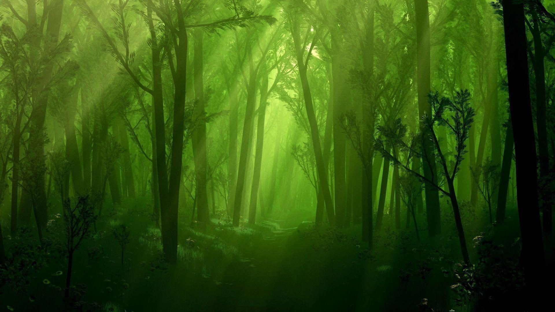 Enchanted Forest wallpaper - 893268