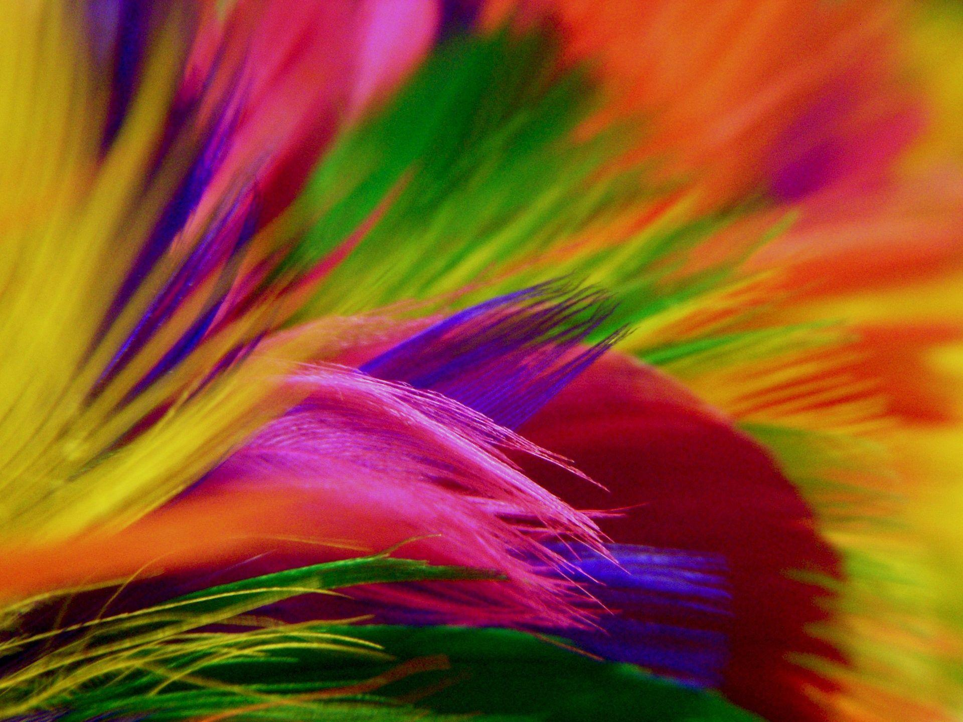 Free Colorful Flower Desktop Wallpaper: Colorful HD Backgrounds