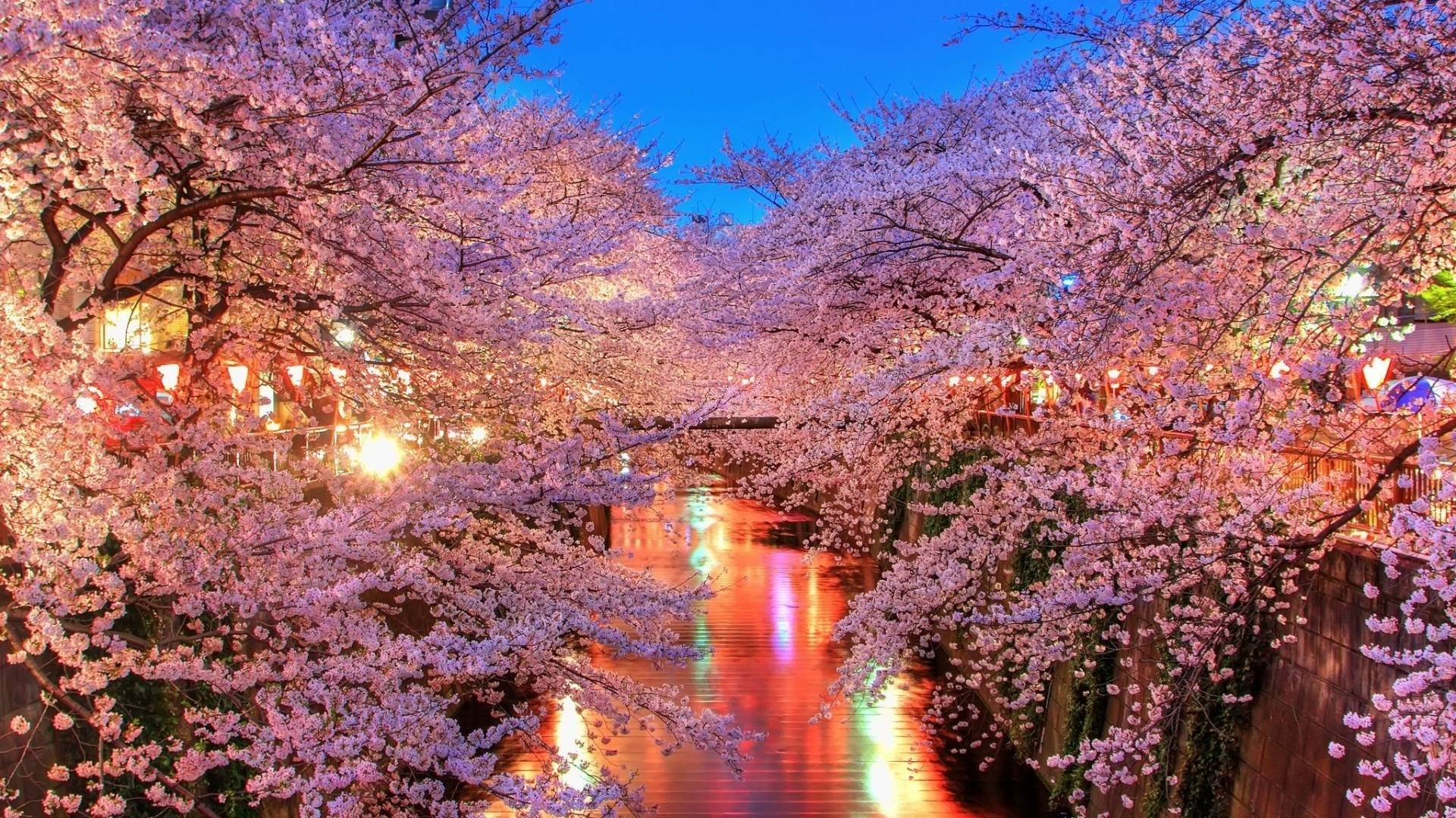 Free Cherry Blossoms City Lights Wallpapers, Free Cherry Blossoms