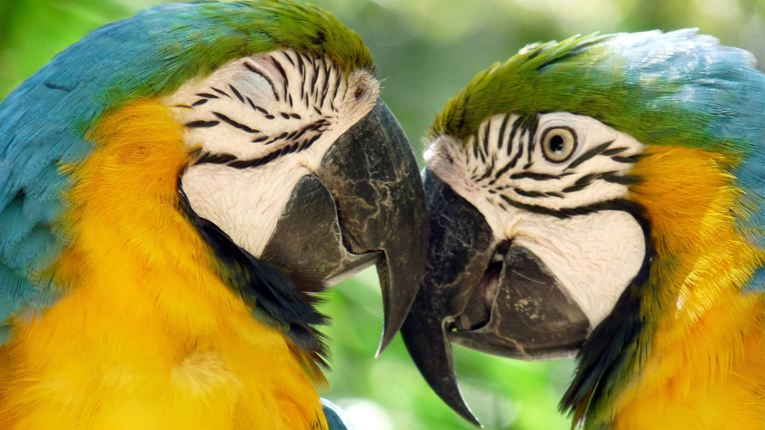 Breeding Macaw Parrots Wallpaper In 2560x1440 Resolution Free ...