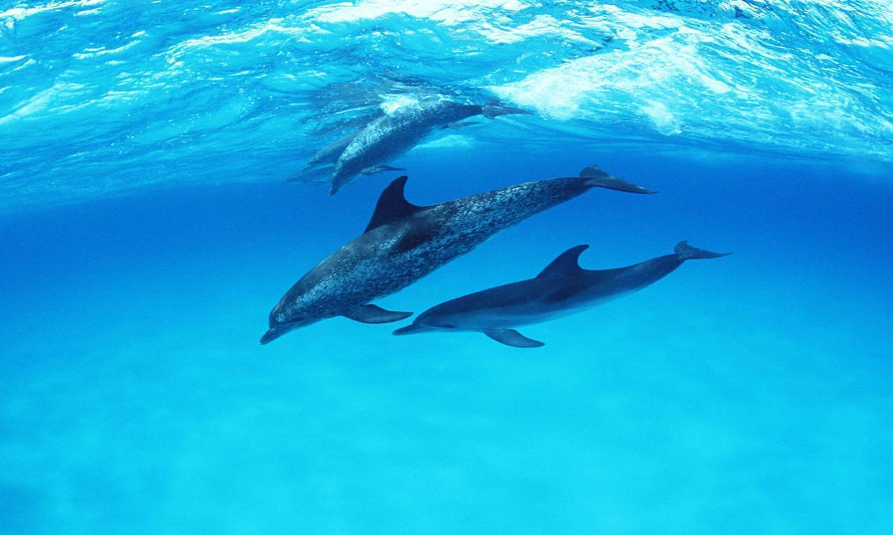 cute dolphin wallpapers wallpaper cave