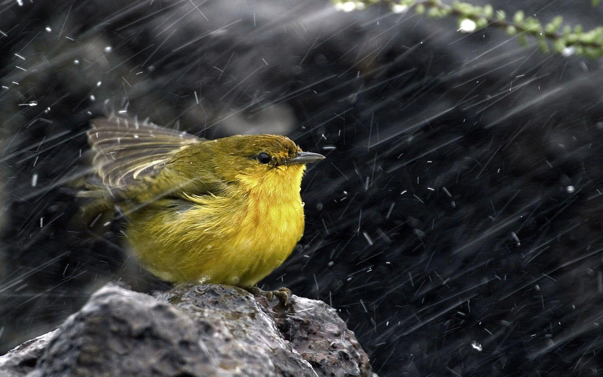 Bird On The Rain Wallpapers For PC Wallpapers
