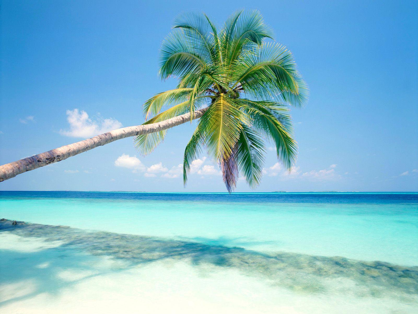 Free Desktop Wallpapers Tropical Islands