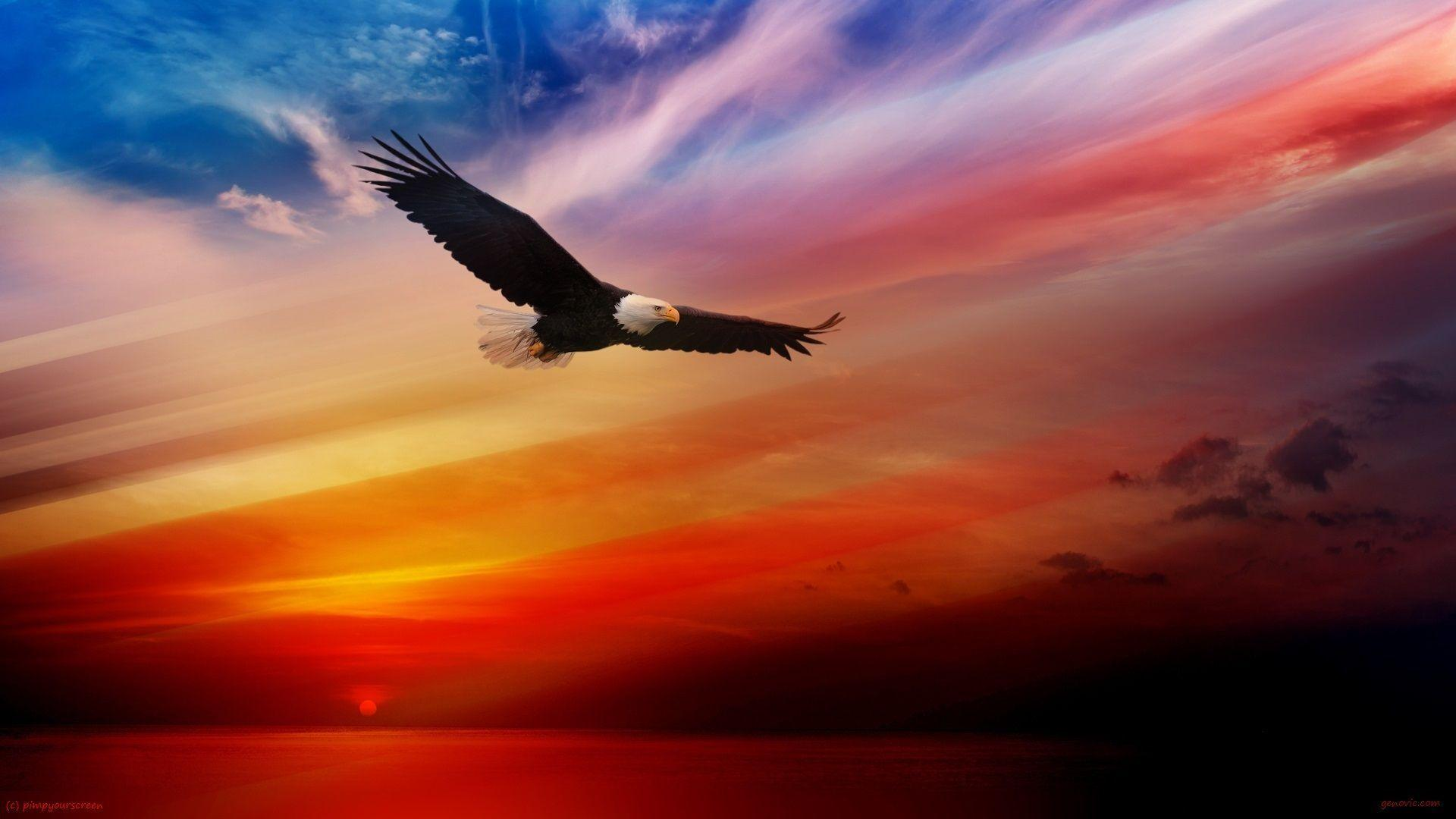Flying Bald Eagle Wallpapers HD 1080P Free For Desktop