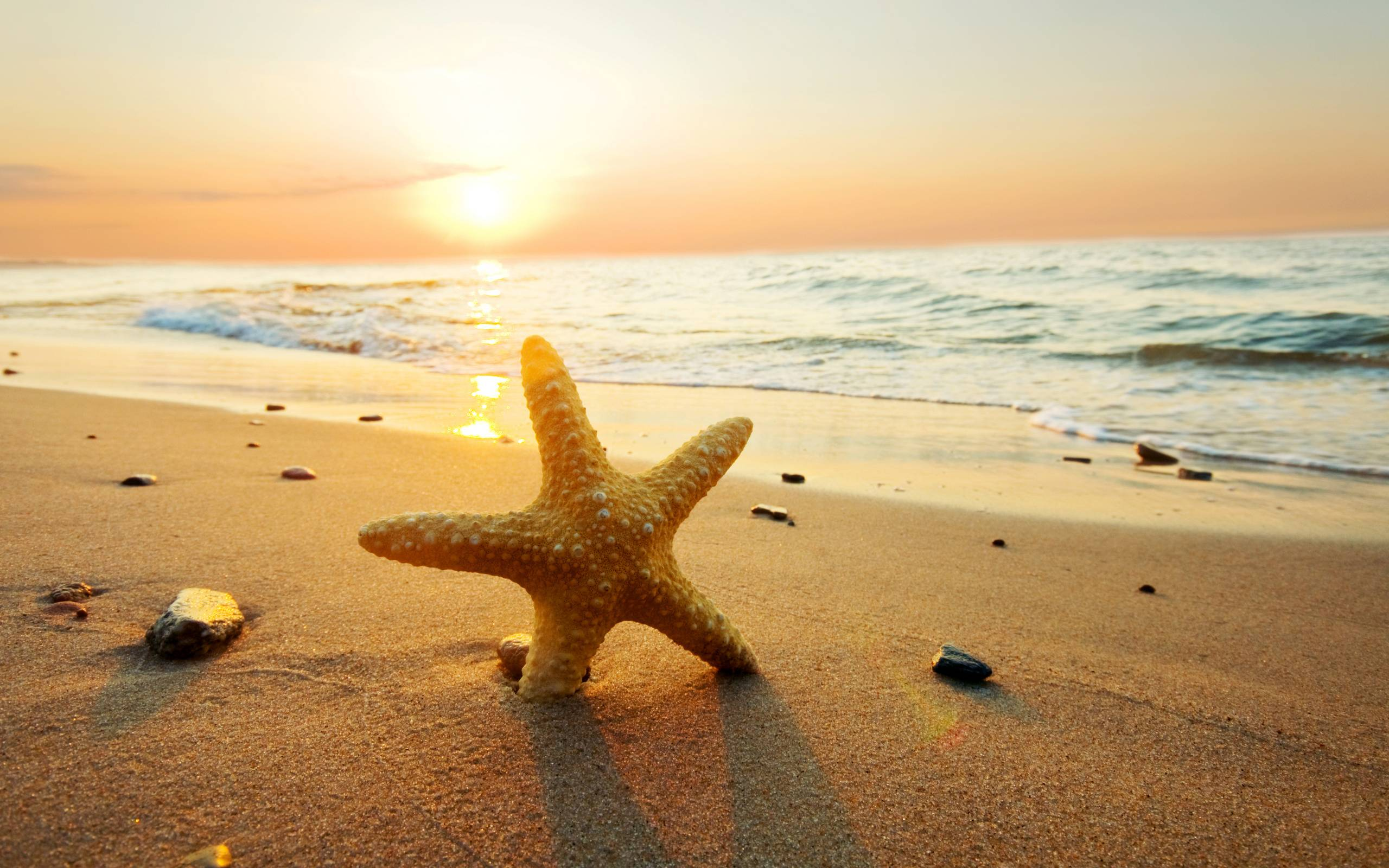 Starfish backgrounds wallpaper cave for How to fish from the beach