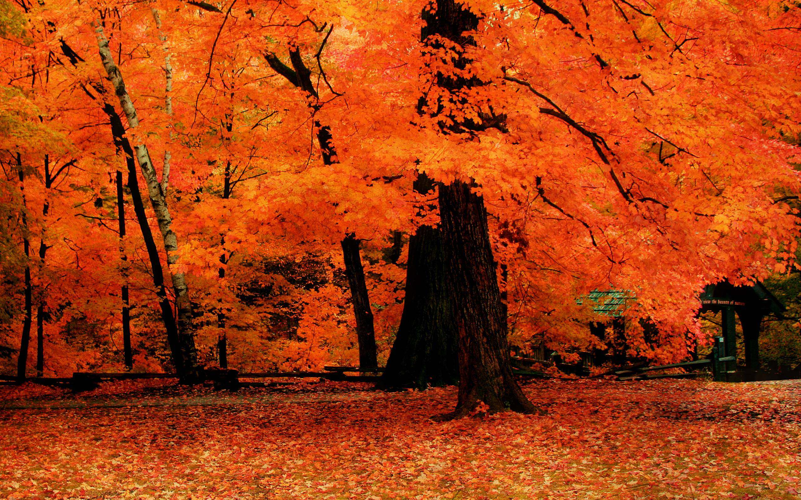 red fall wallpaper - photo #8